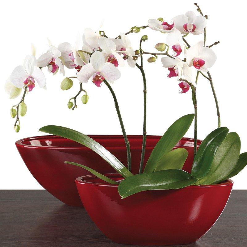 flower shop indoor plants_full_6