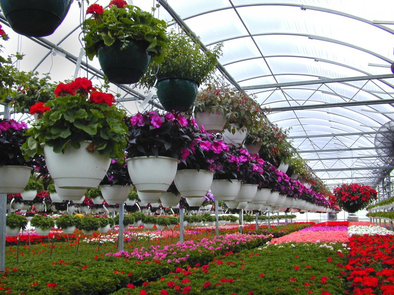 Outdoor Flower Plants Flower Shop Outdoor Plants