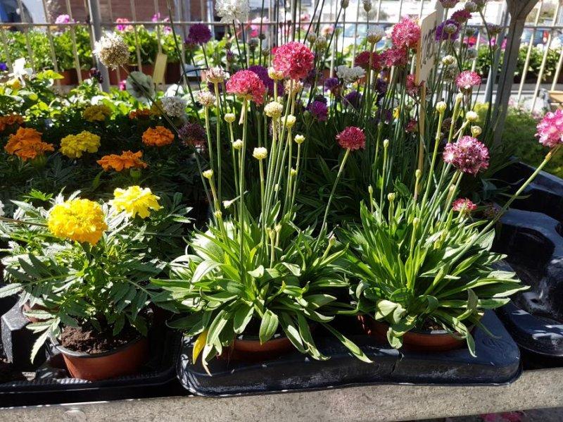 Flower shop outdoor plants annivia gardens in paphos for Outdoor decorative plants