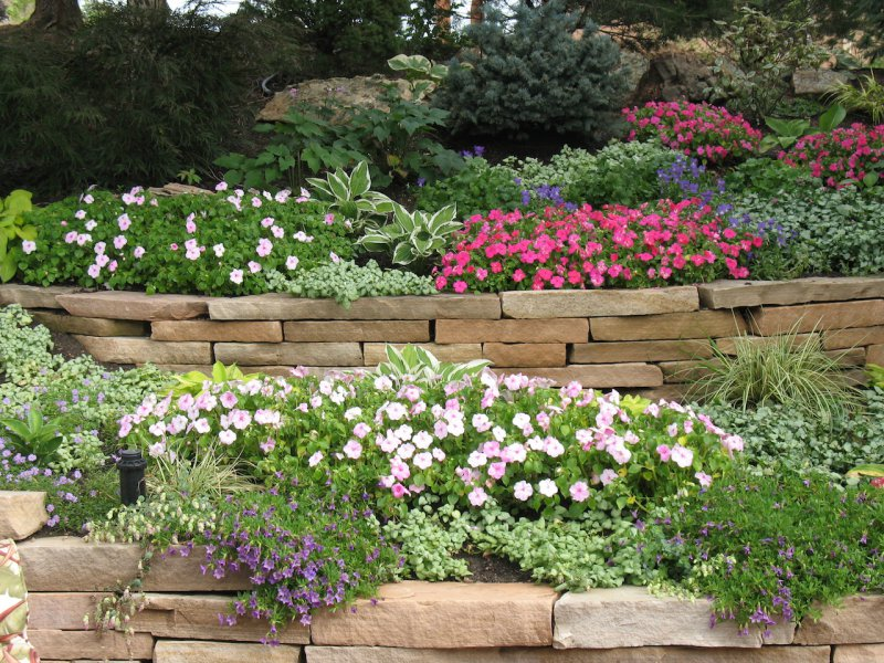 Цветы для подпорных стенок