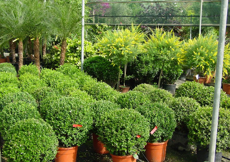 flower shop outdoor plants annivia gardens in paphos
