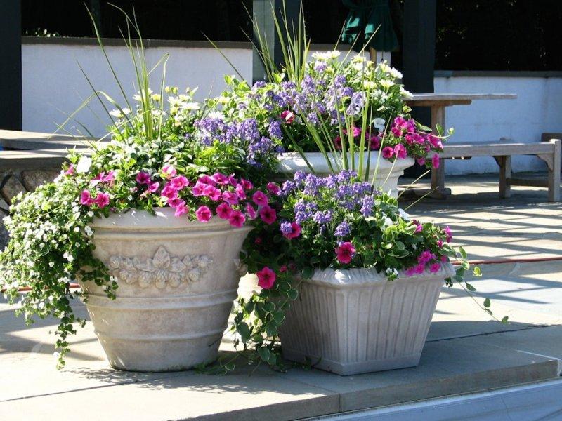 Annivia Gardens & Flower Shop - Pots - Annivia Gardens in Paphos Cyprus